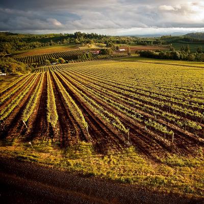 Wvv estate vineyard bernau 20 block erhpdf