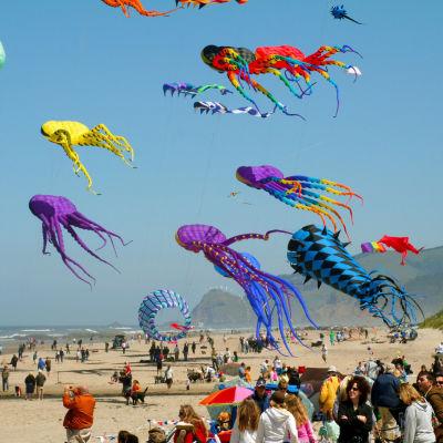 6 14 kites rbrf4t