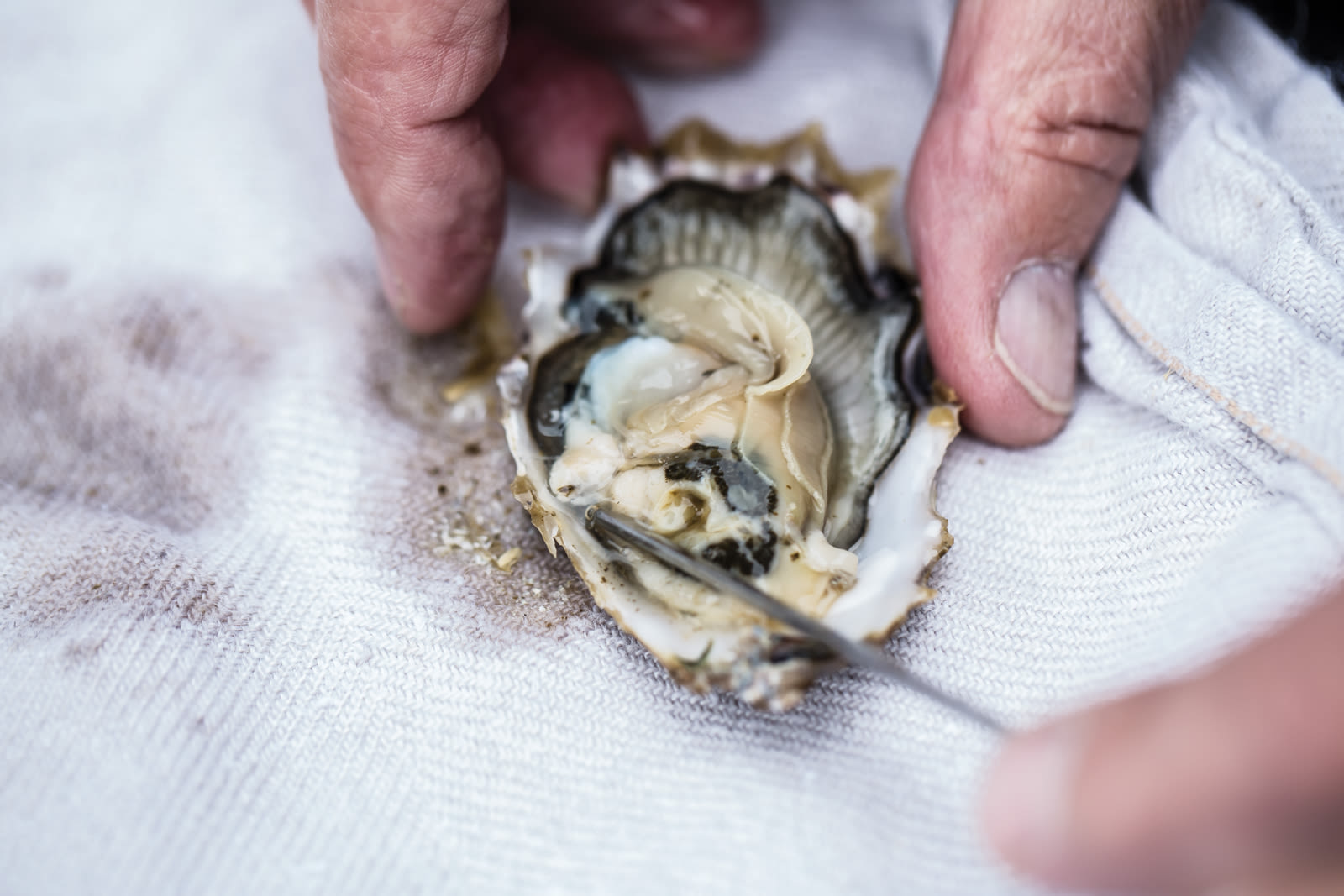 Oysters 14 pp0egs