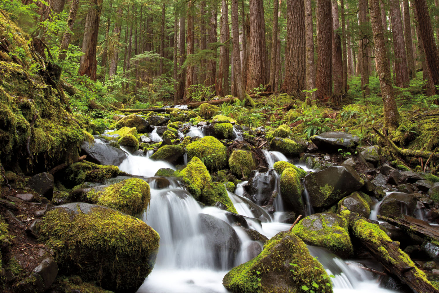 Wander guide: olympic national park travel guide the wander guide.