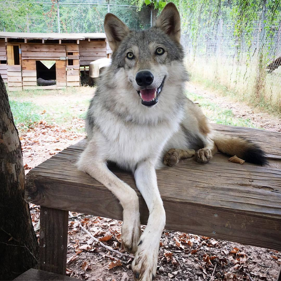Lapua wolf emmtmj