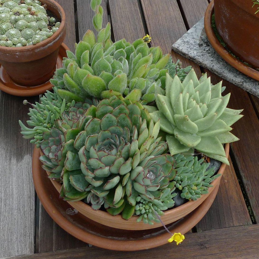 Succulentpot vll30d
