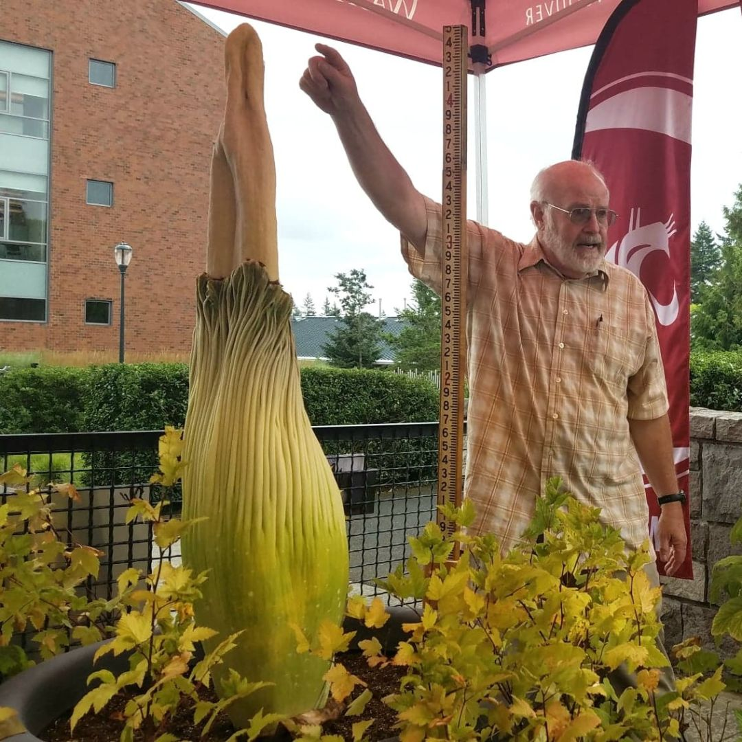 A Rare 17 Year Old Corpse Flower Is Blooming In Vancouver Portland Monthly