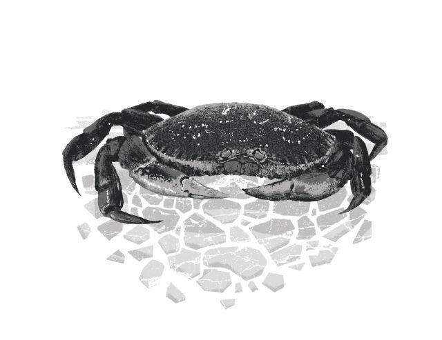 Crab dbwwhh