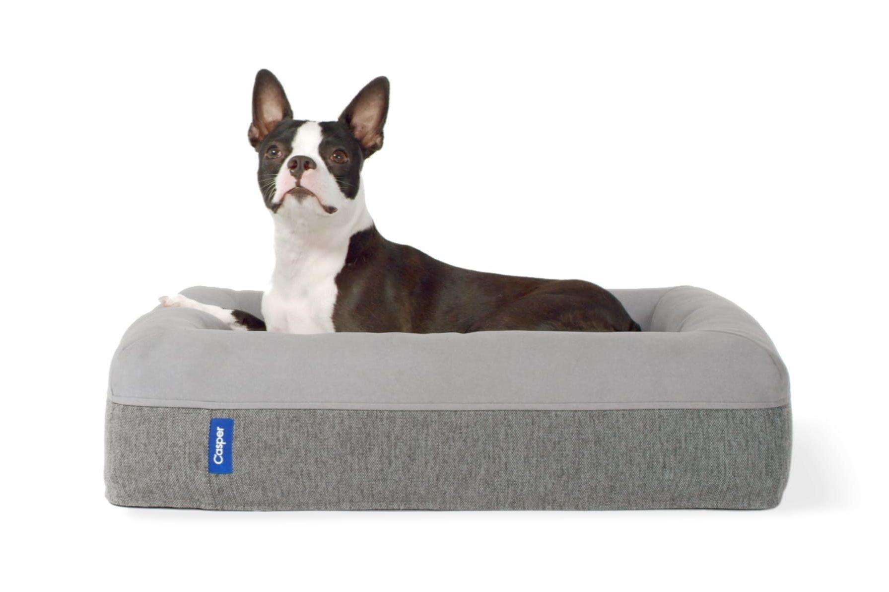 Casper dog mattress awake poster equrrw