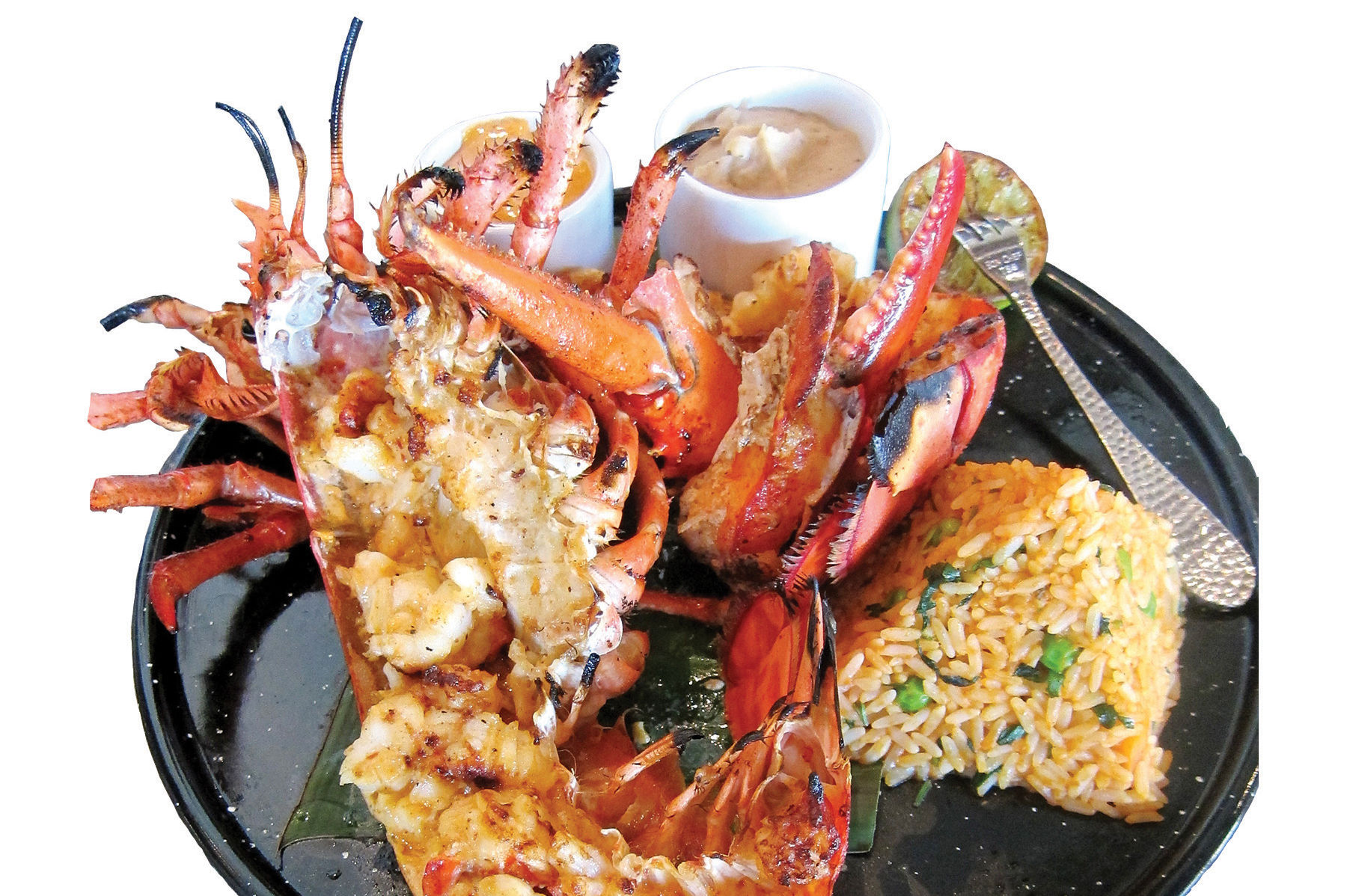 Lobster puerto neuvo paula murphy dv44mu
