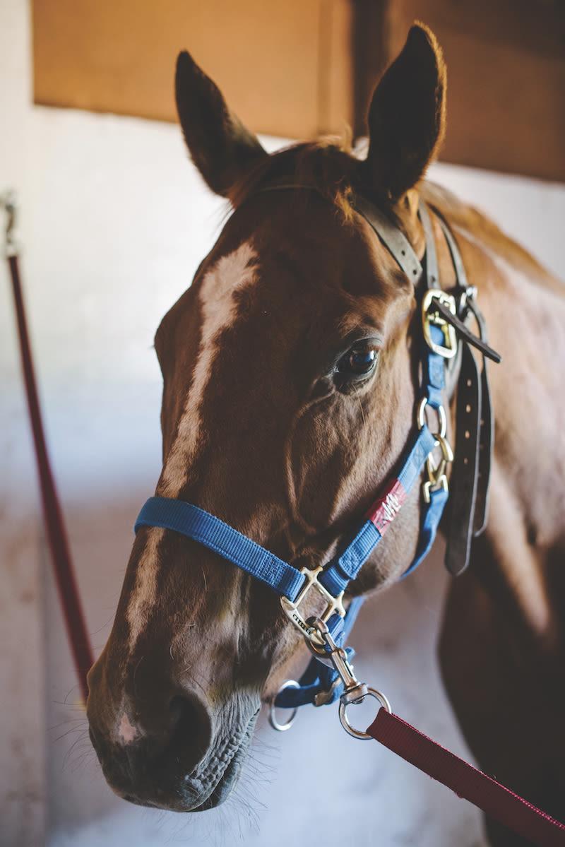 0816 horse healers gjaw26