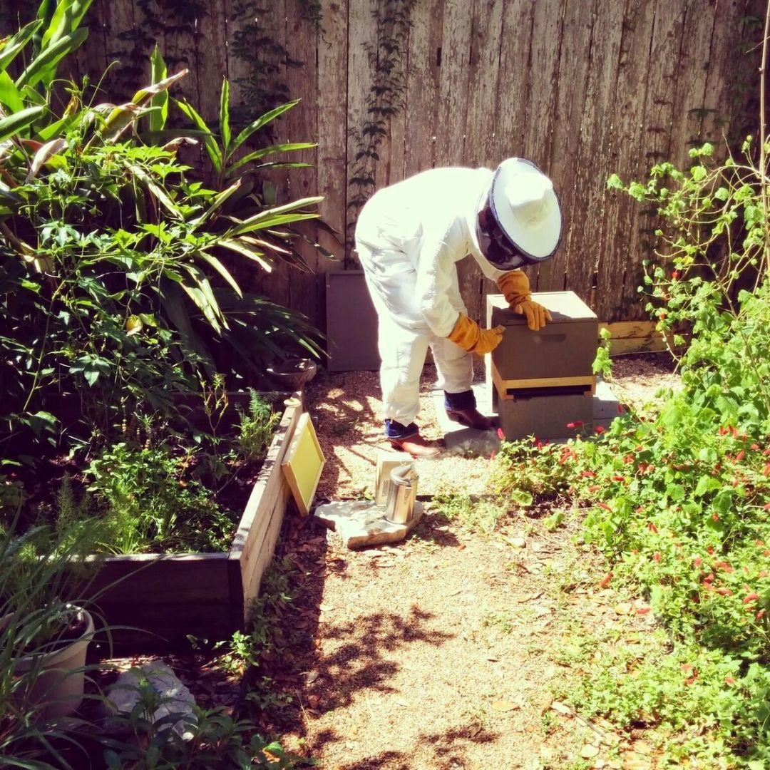 Buergers Doing Some Backyard Beekeeping.