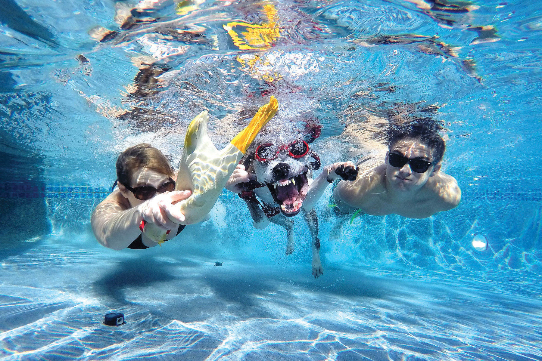 0517 icehouse rummies beach club dive luhj6h