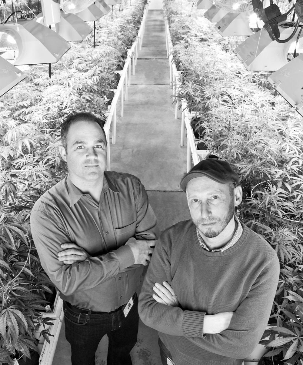 Cannabis iehcoi