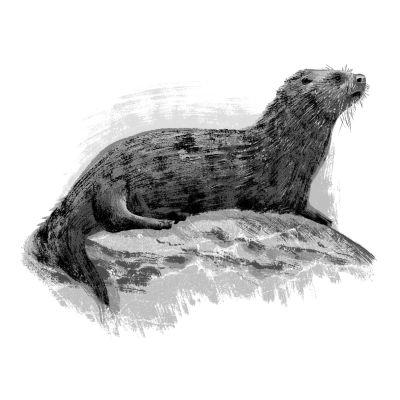 Sea otter etowce