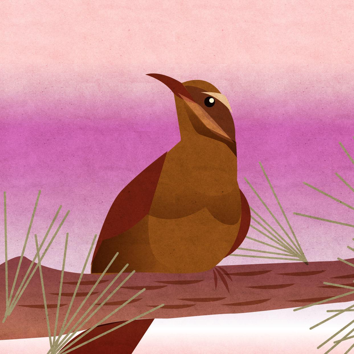 Pomo 1016 editors note bird illustration ovfnma
