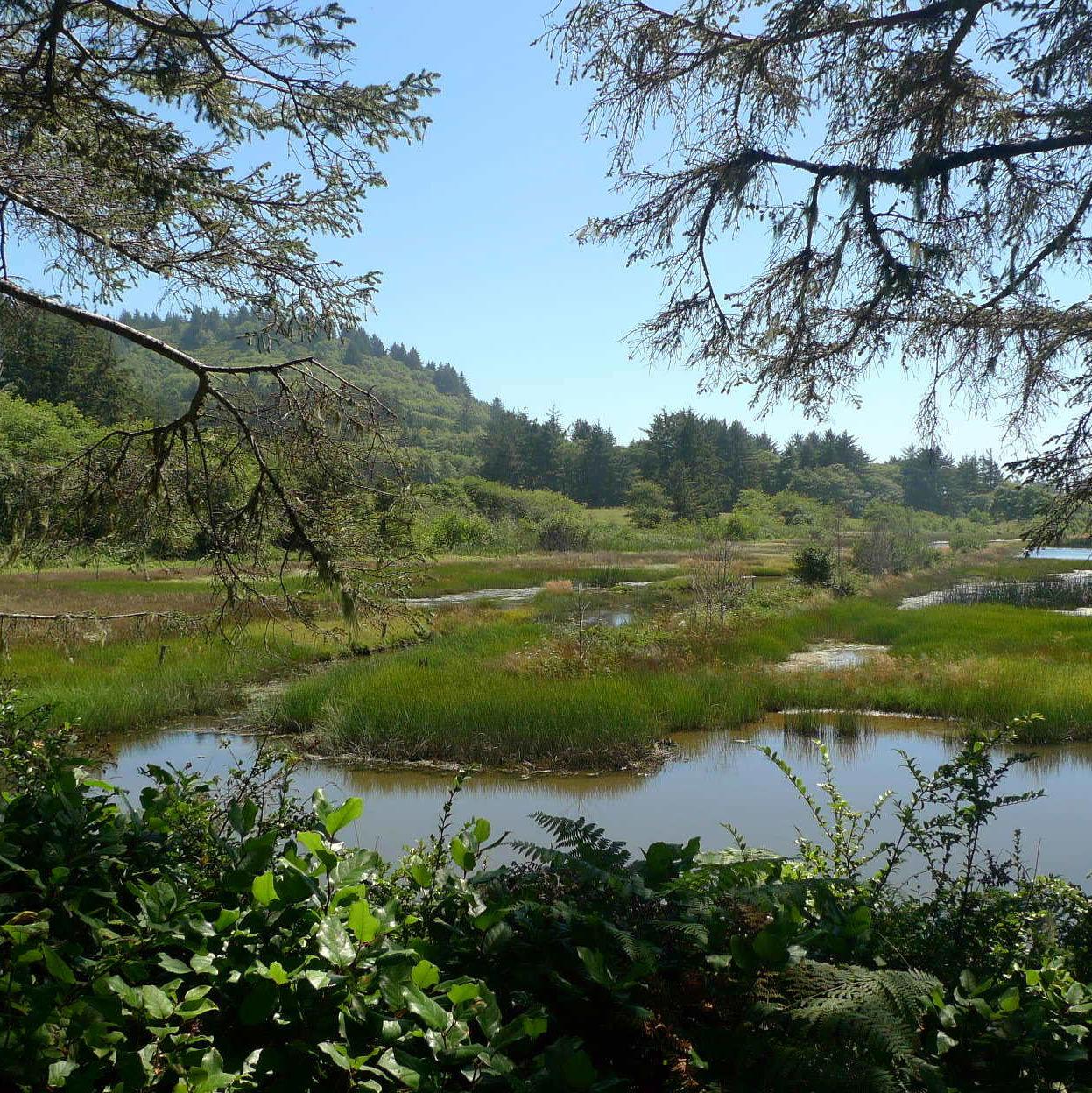 Sitka fresh water wetland 2 nmfn4t