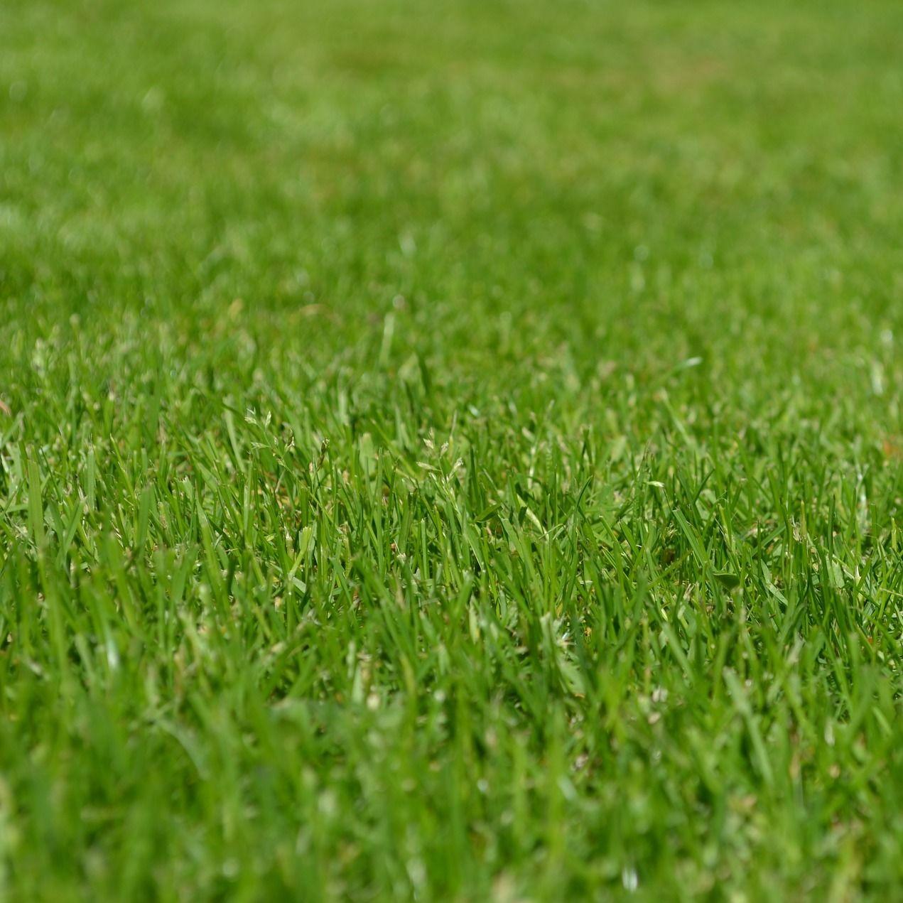 Grass nbwtb1