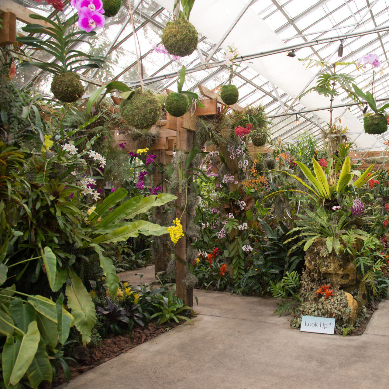 Selby gardens orchidshow 2016 0437 wmn0wn