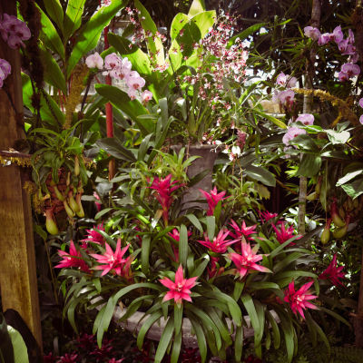 Selby secret garden 2 yaqhyh