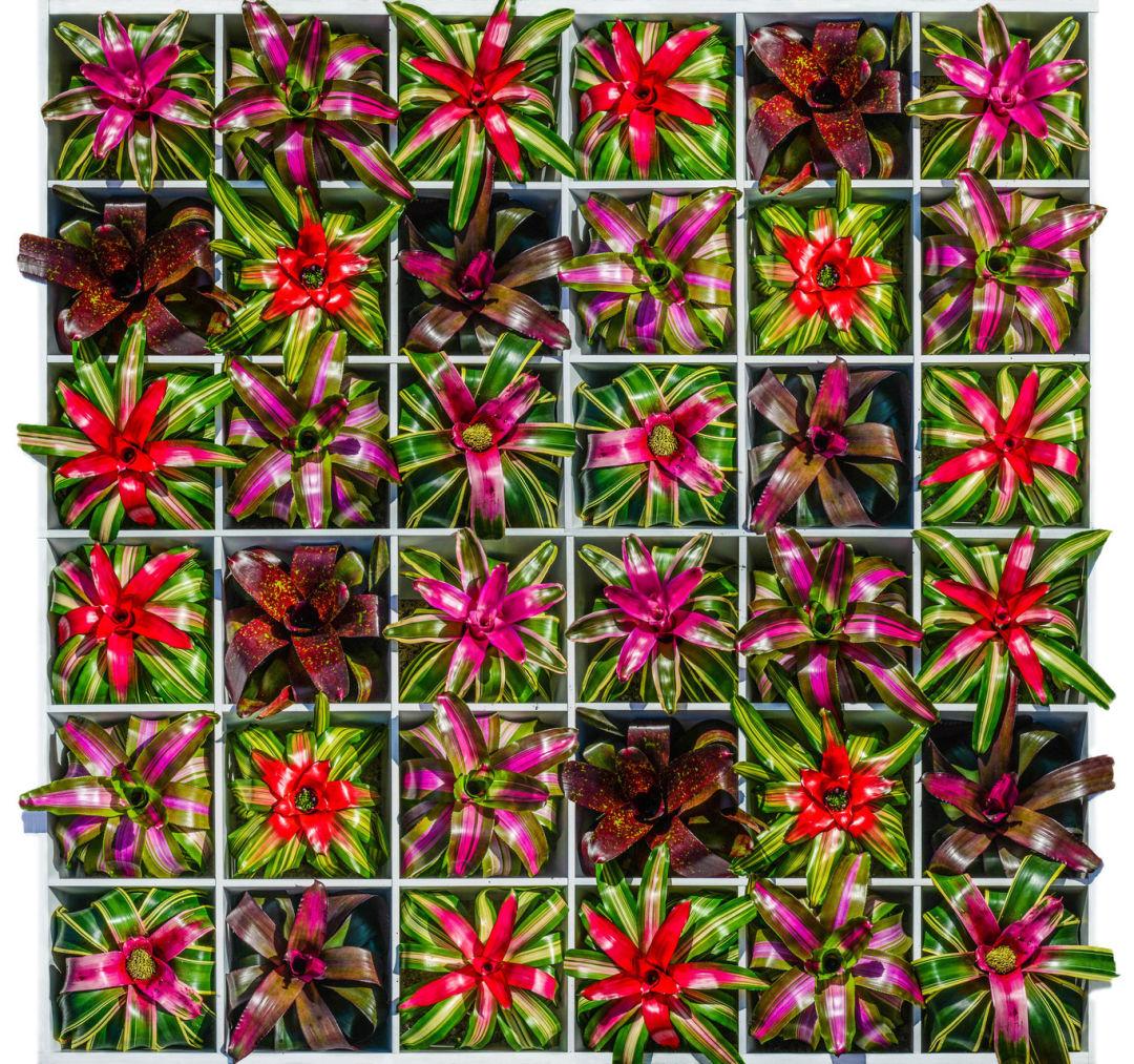 Selby gardens warhol exhibit f9bddd