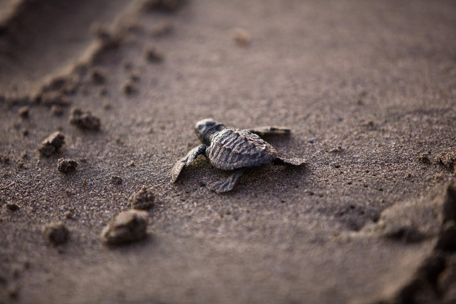 Sea turtle o3rub4