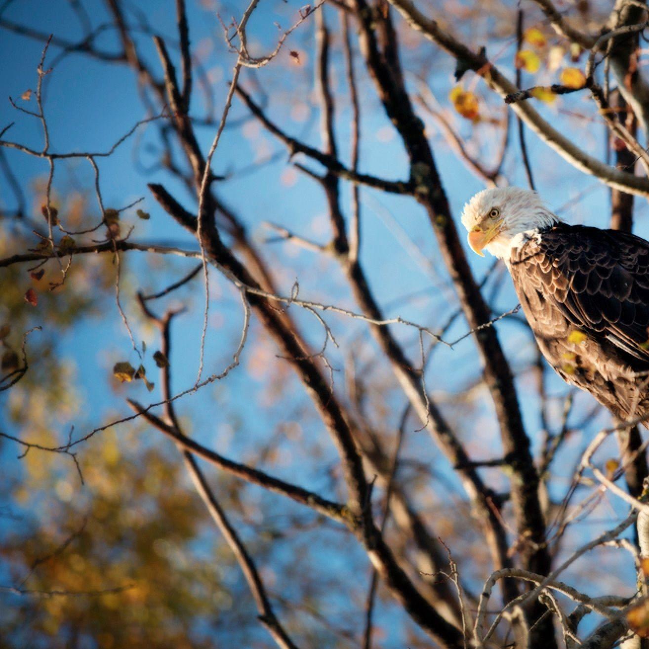 Eagle actqf5