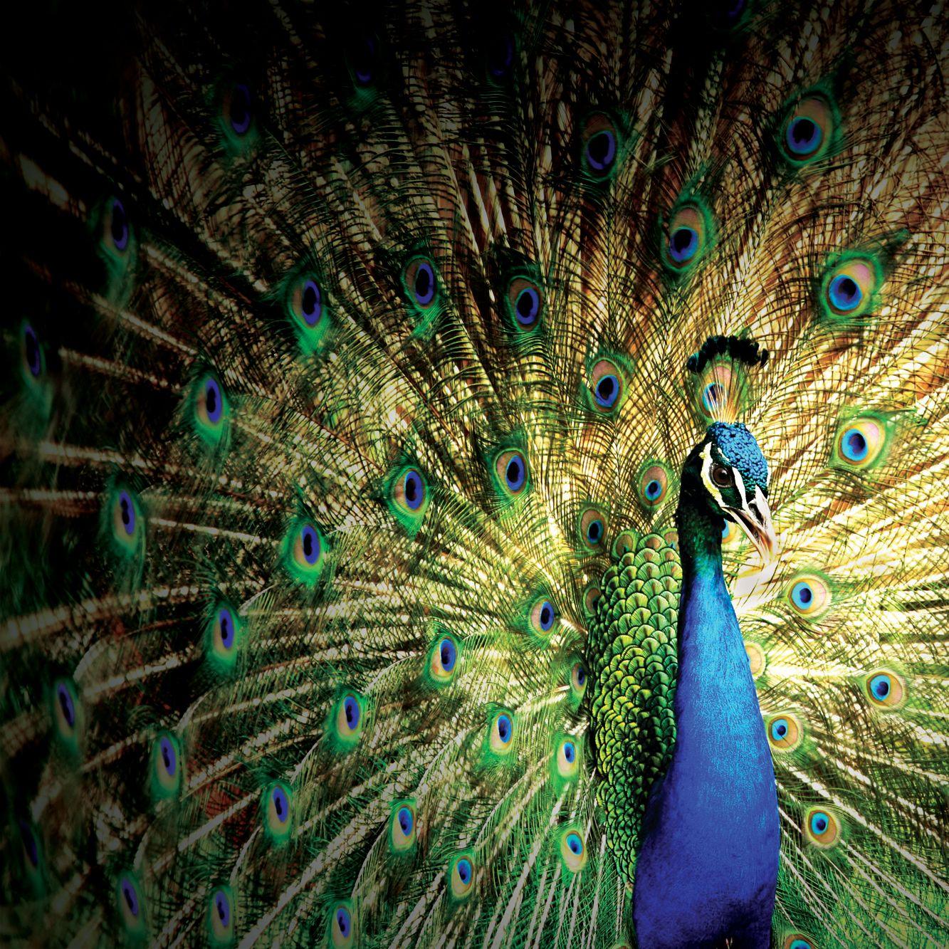 Shutterstock 152036102 flxuze