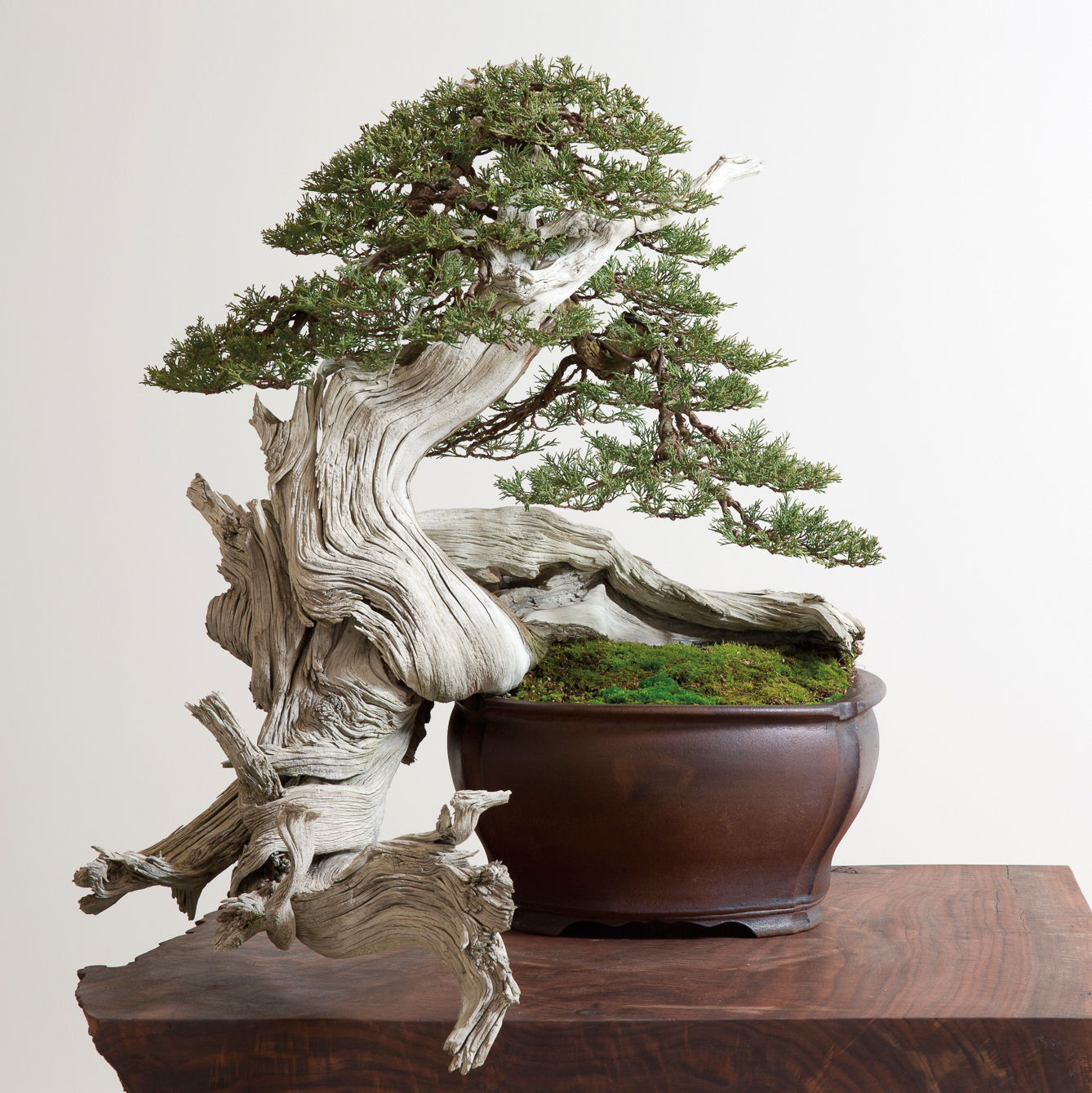 0915 bonsai idtcde