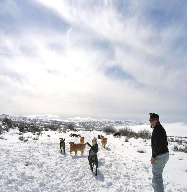 Park city winter 2013 mountain moguls doggy business dogs in snow xzhvgj