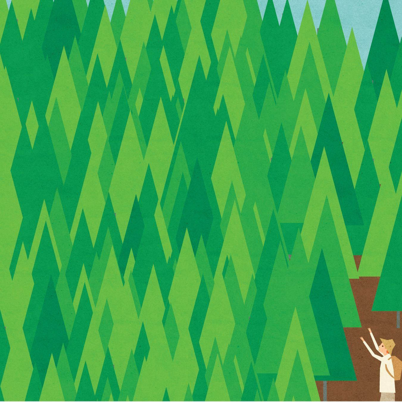 Pomo 0617 editors note forest park illustration p3te1i
