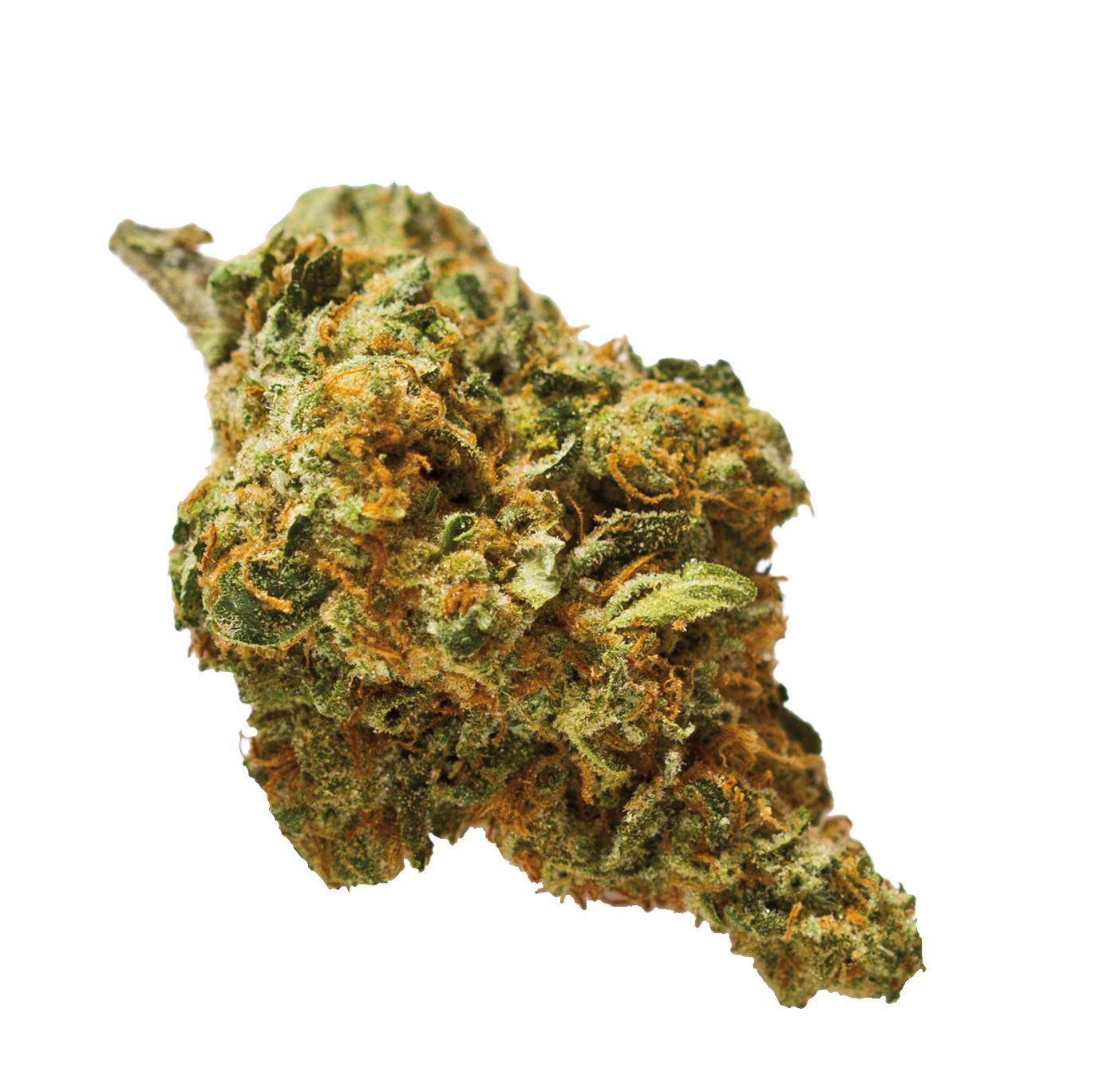 0218 cannabis bud m9dqts