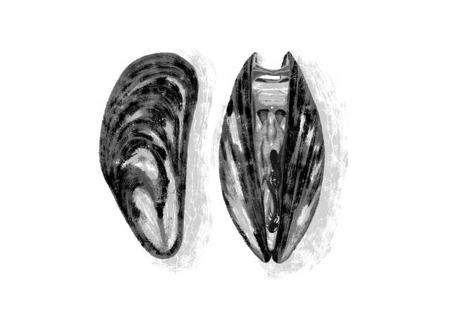 Mussel otyw9v