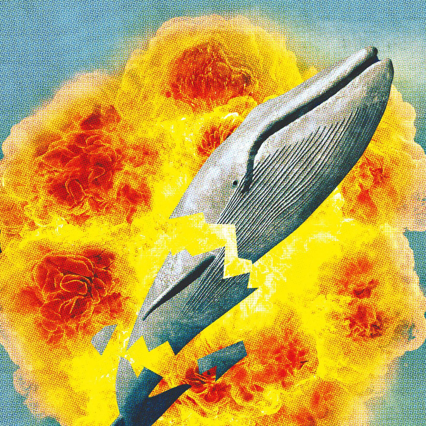 Pomo 1216 pop exploding whale wkkig8