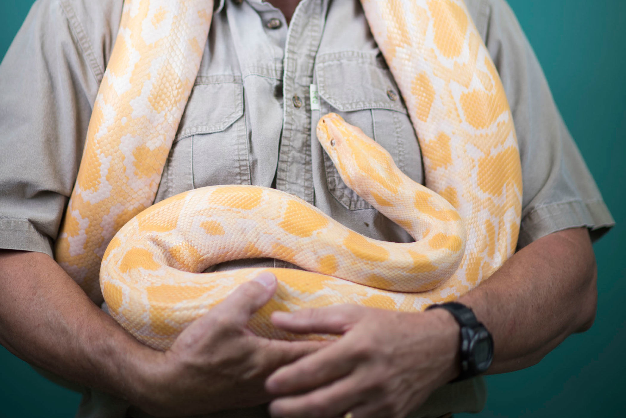 Snake charmer jnwlhf
