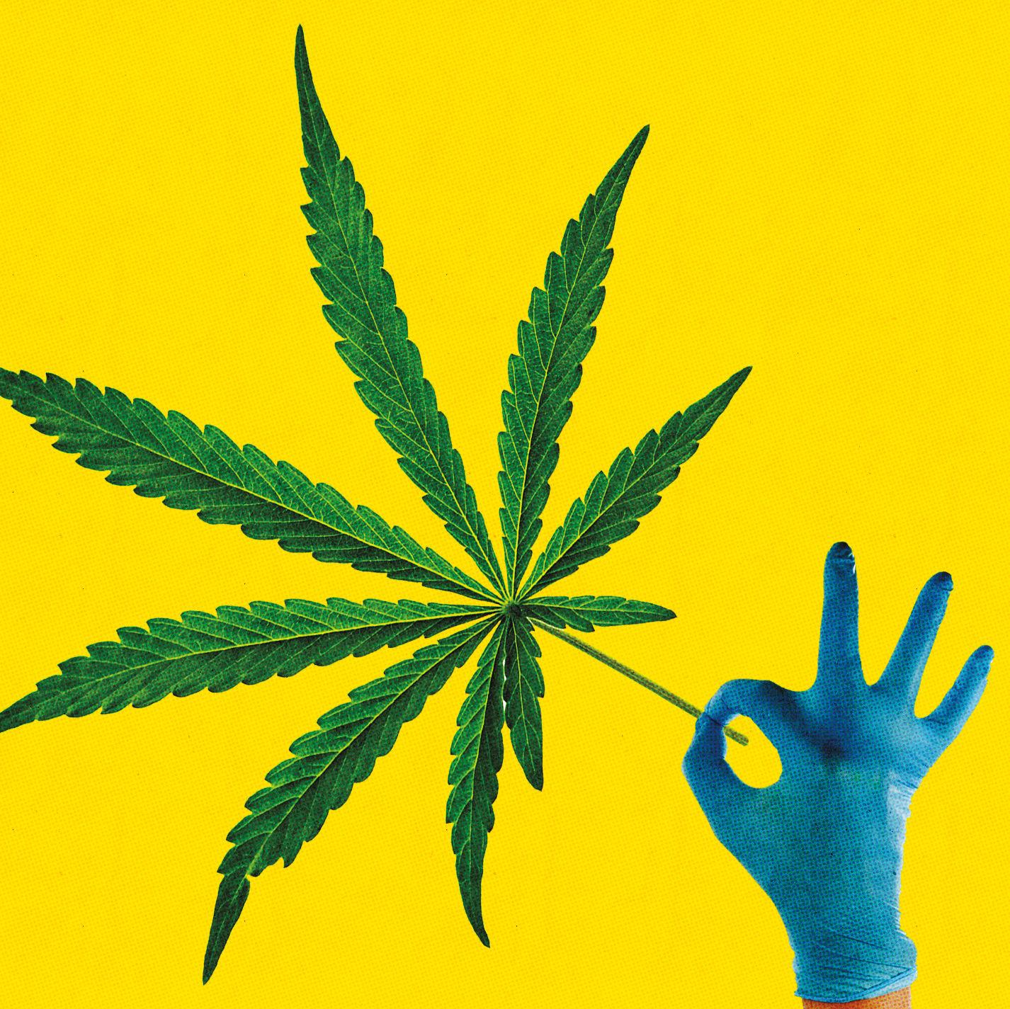Pomo 0417 clackamas marijuana weed lsoffj