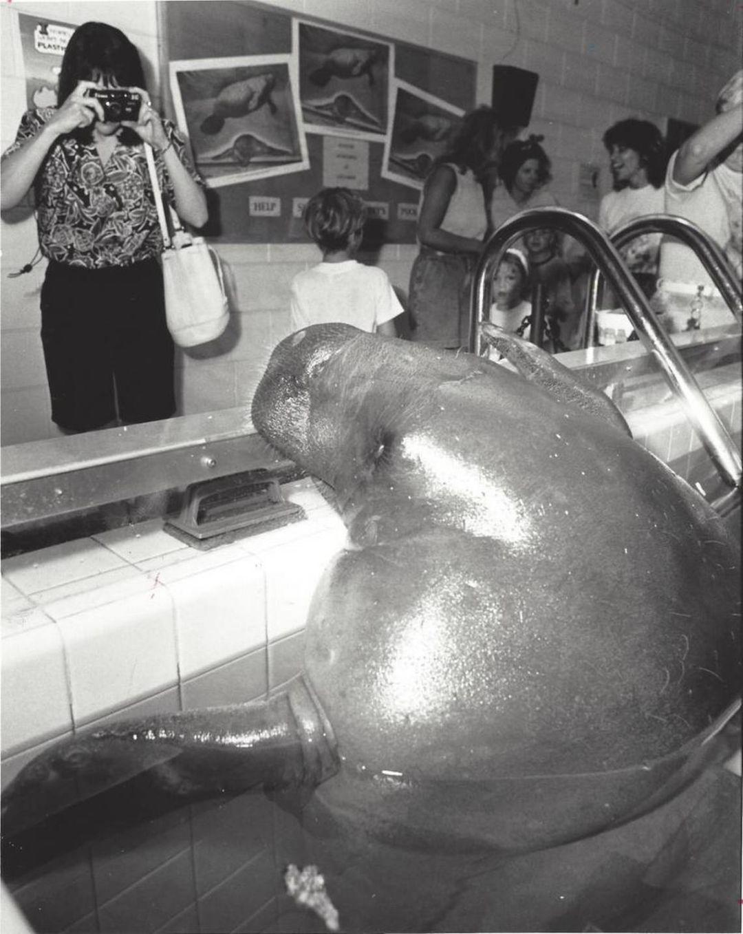 Snooty 1992 tw39gq