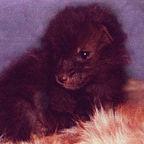 281x144 baby fox on fur zbruoc