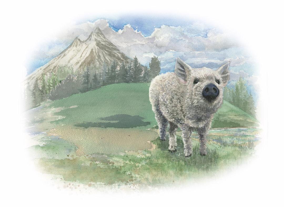 Pigs001 huh81p