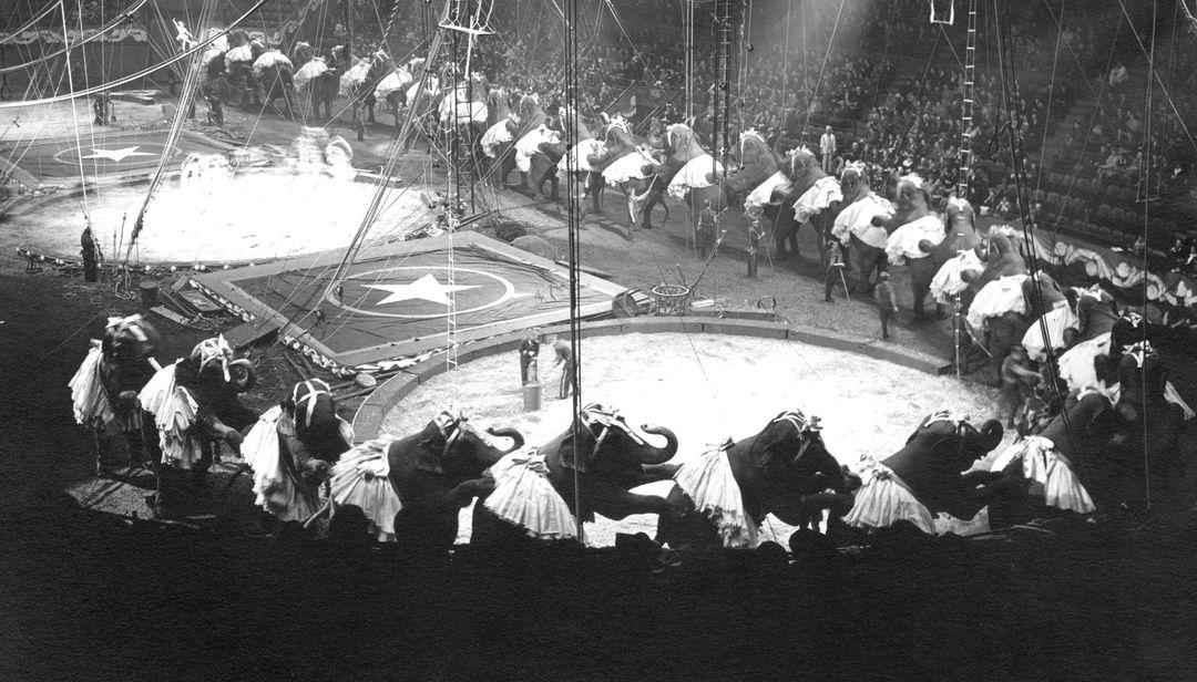 Ringling's elephants performing the Circus Polka