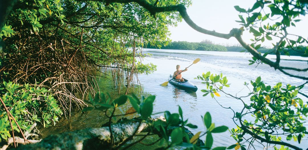 Paddling through mangroves btvknf