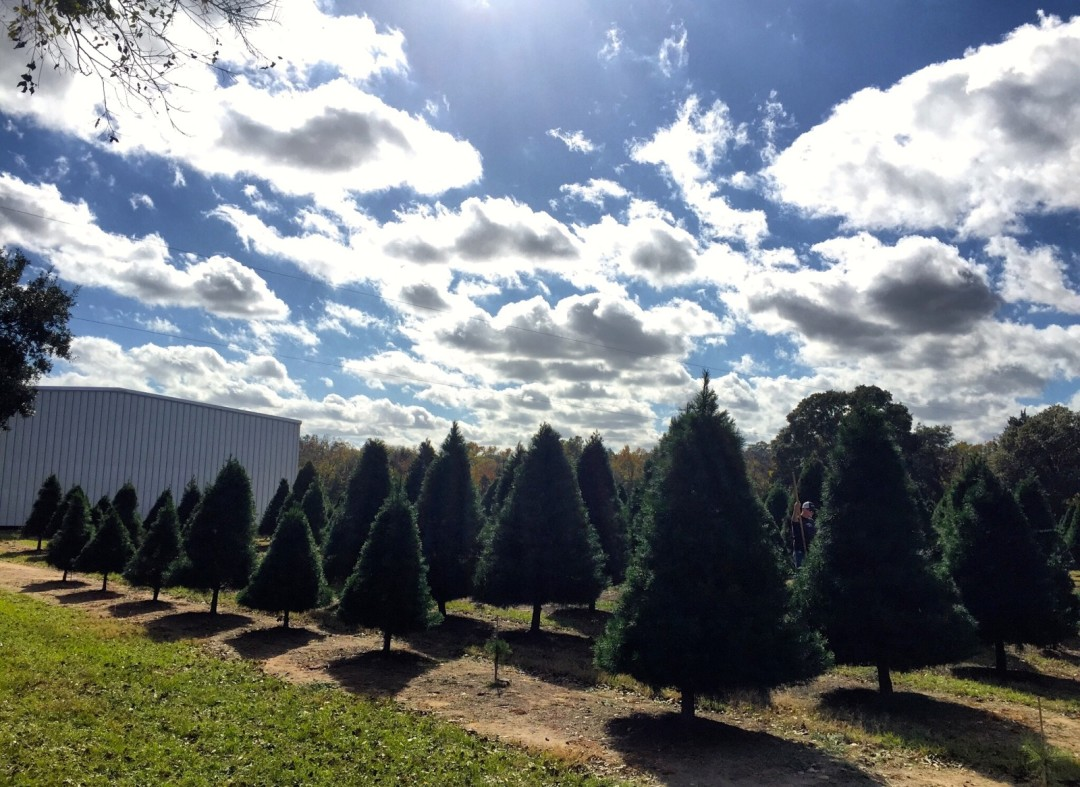 4 Christmas Tree Farms To Visit This Holiday Season