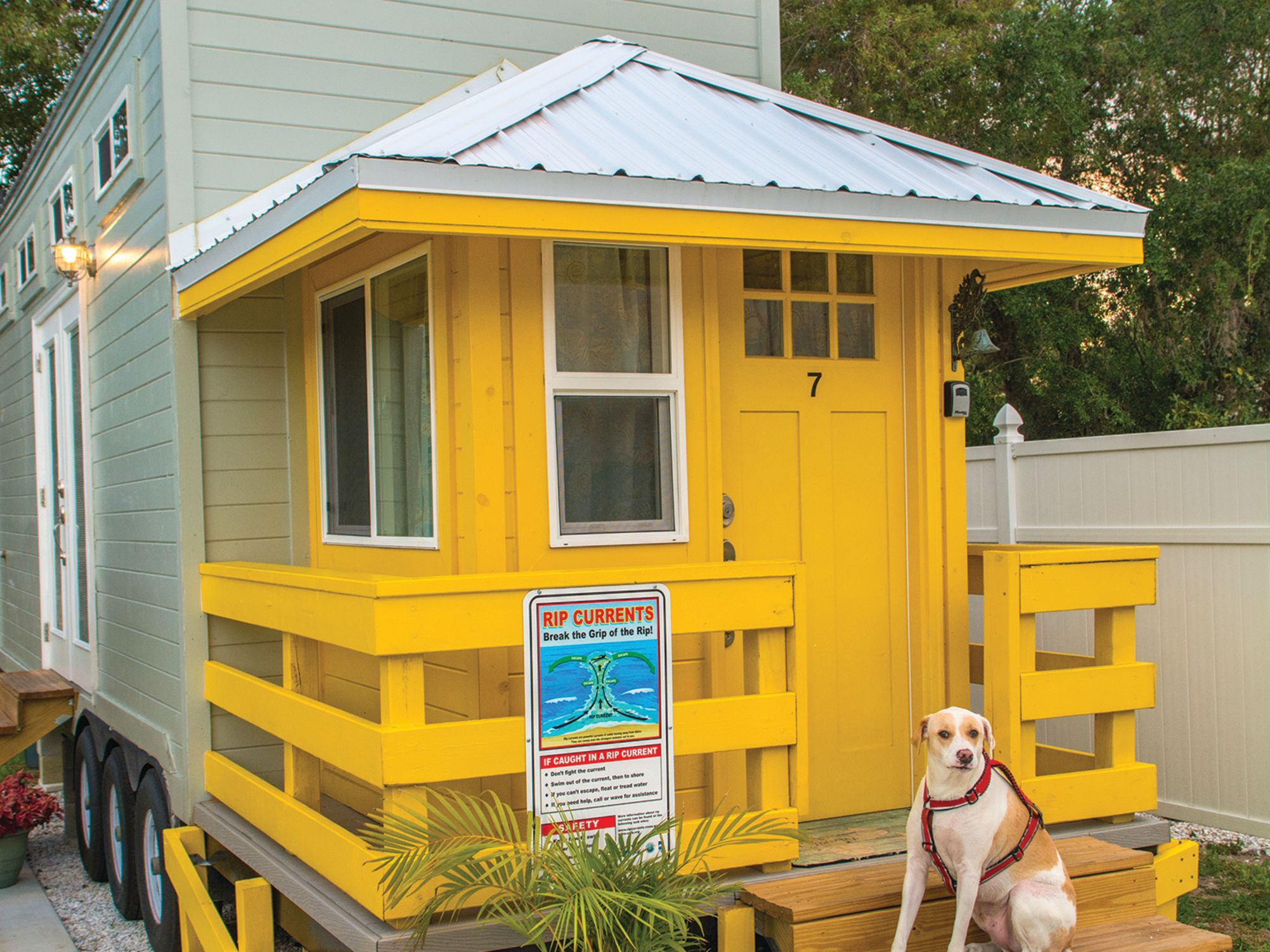 Tinyhouse yellowlifeguardwdog qhuzwz