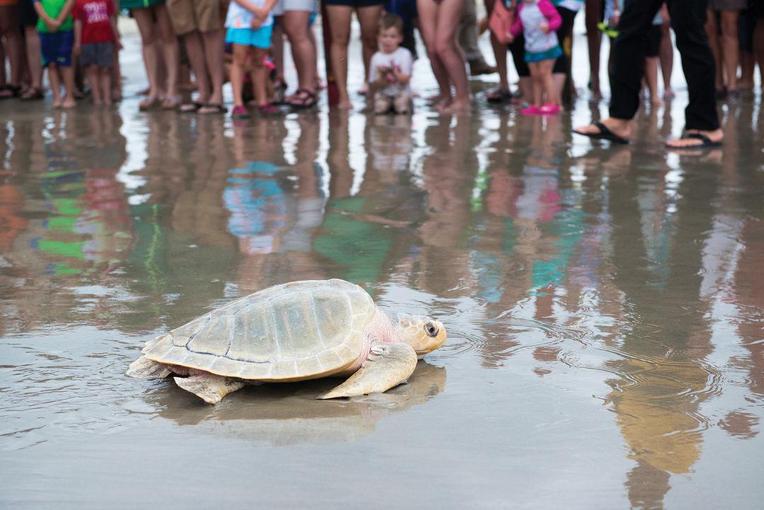 Sea turtle release 2016 0011 0724 vyoxgj