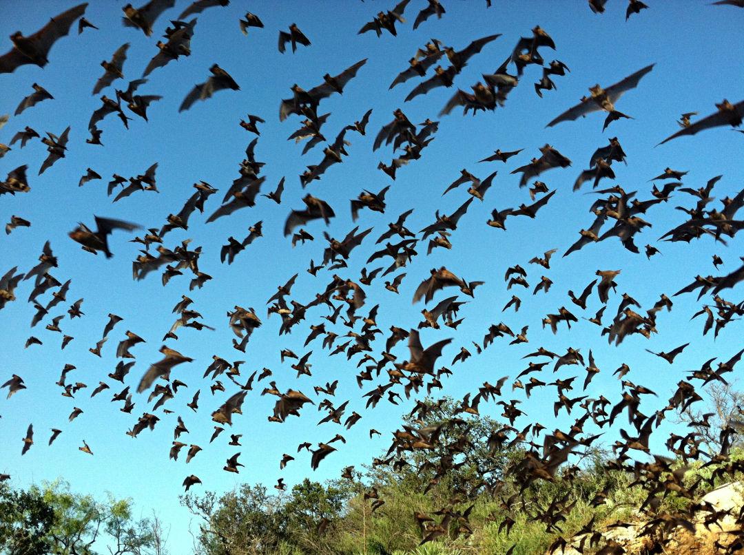 Bats e4uba9
