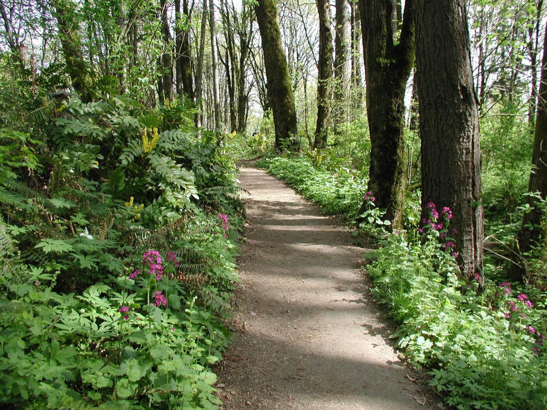 Forest park 06 aog1ge