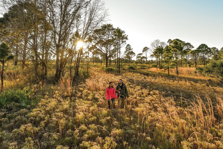 11 Wild Animals You'll Find in Southwest Florida | Sarasota Magazine
