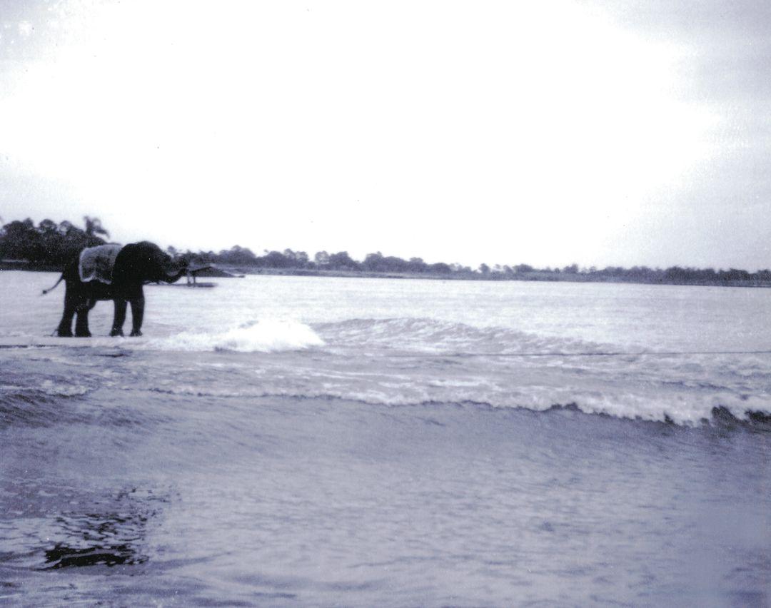 Elephant mjanim