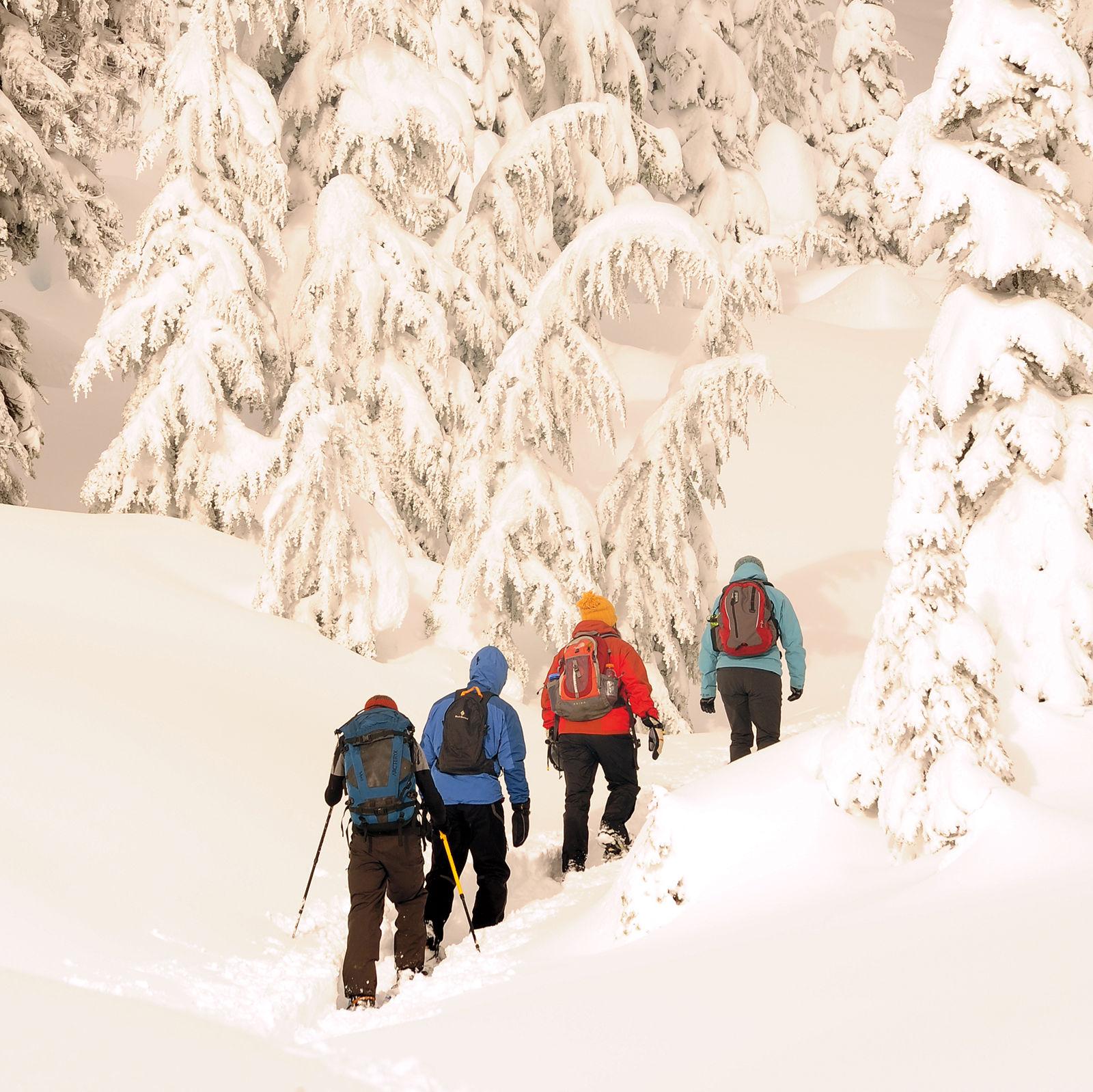 Snowshoers at paradise credit  visit rainier ymvm3v