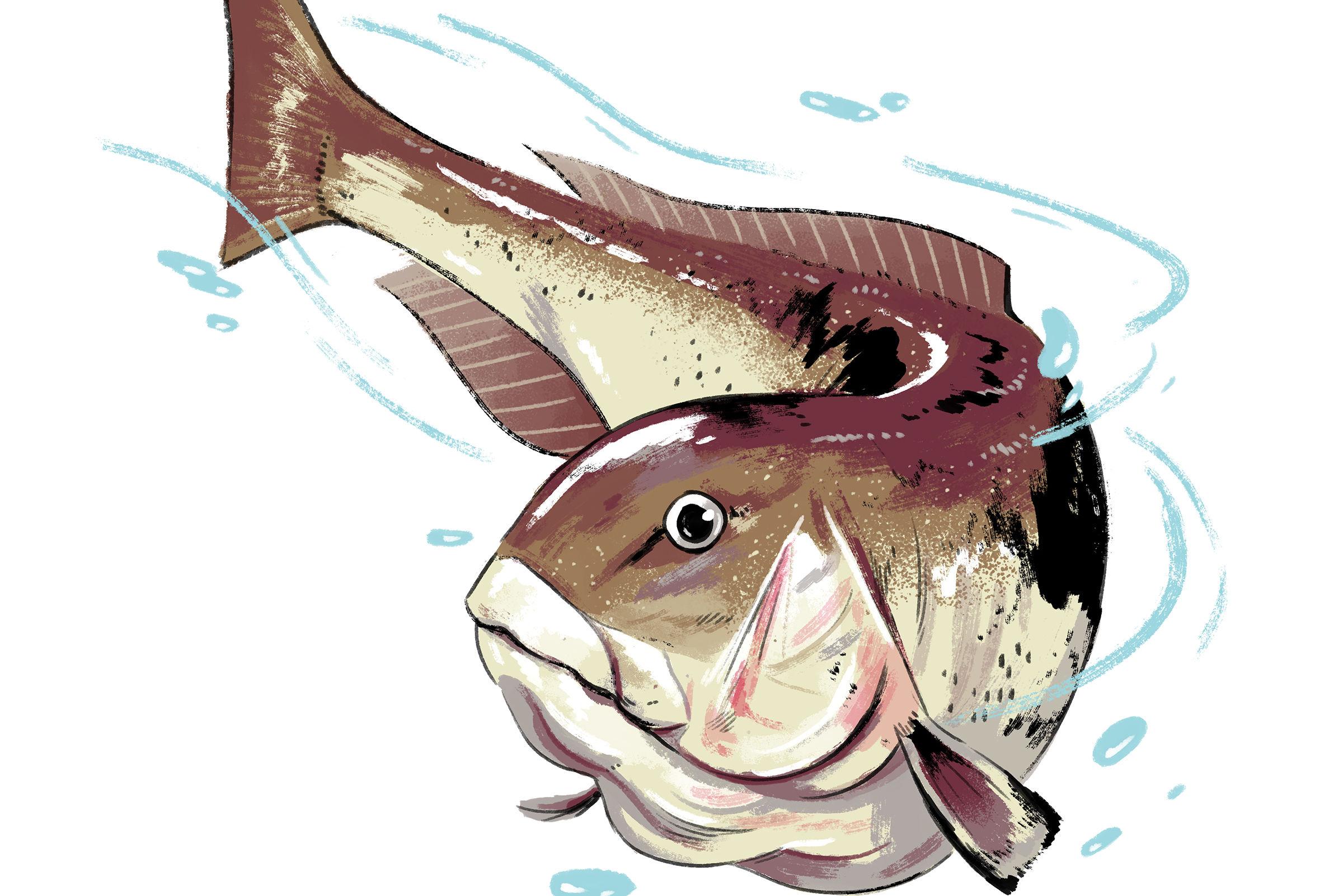 Kf houstonia fish spots   tilefish mbdgjt