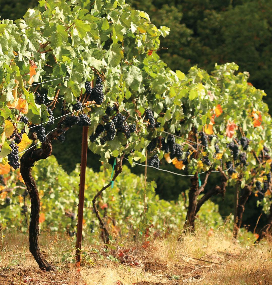 0416 teutonic winery borgopass wsb6qo