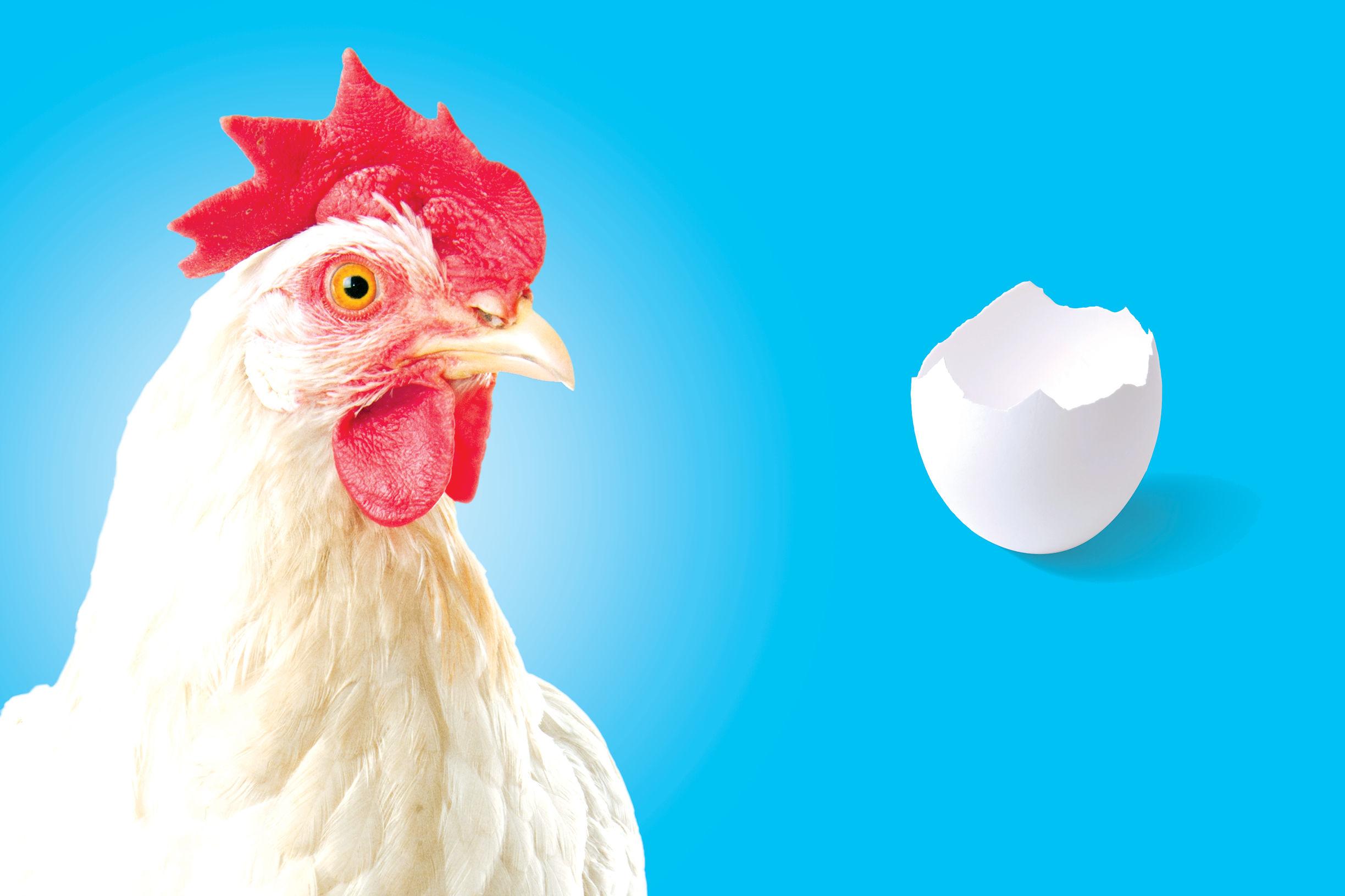 0915 chickens wr1dpi