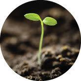Seedling btocfa