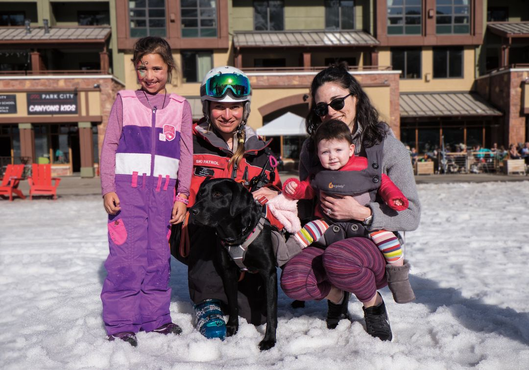 Avalanche dogs f4325 ftvo5v